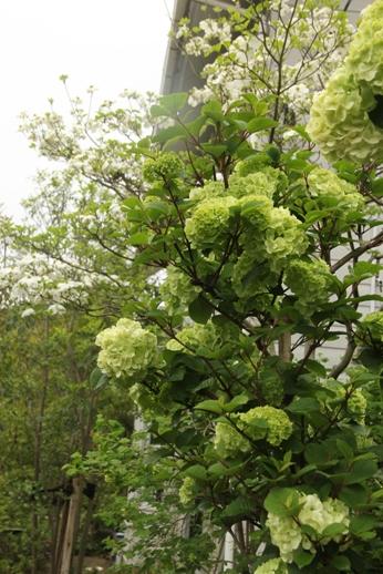 ヒメウツギの季節_b0214473_954527.jpg