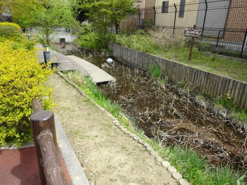 上水本町ビオトープ_f0059673_22314722.jpg