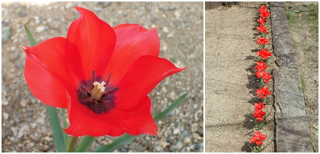 「アンジェリケ」が咲きました_e0289203_2202841.jpg