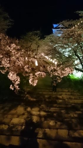 桜_a0111845_21025682.jpg