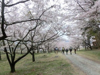 神宮川の桜並木_f0019247_17452834.jpg