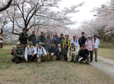 神宮川の桜並木_f0019247_17454933.jpg