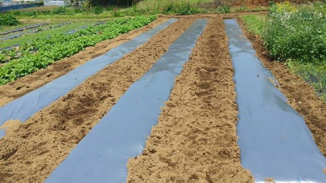 今朝は 乗り型トラクターのVベルト交換をして 急いでトマトの畝を作りました_c0222448_14593151.jpg