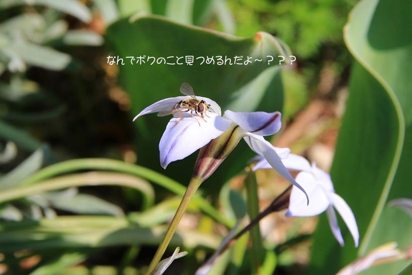 c0145250_10023297.jpg