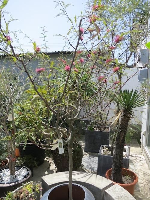 春のフタムラグリーン_f0324766_15241054.jpg