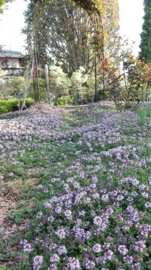 心躍る朝の庭散歩   _e0356469_20253464.jpg