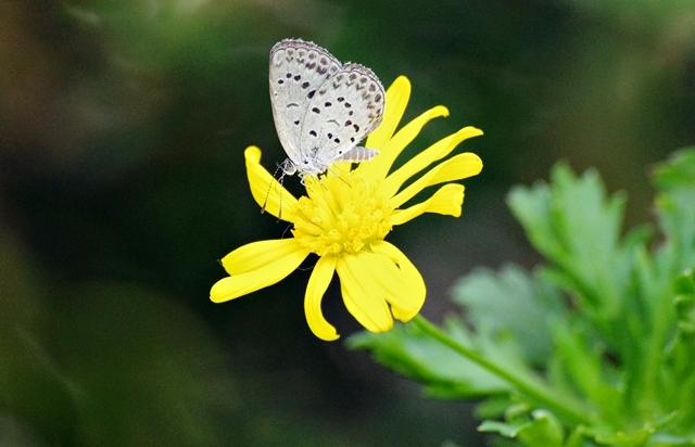 蝶とぶや此世に望みないやうに  一茶_b0018682_924484.jpg
