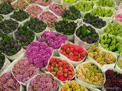 春のお花 New Covent Garden Flower Market_f0238789_2153912.jpg