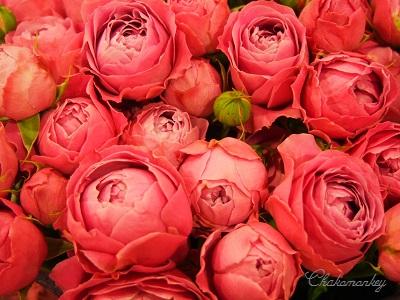 春のお花 New Covent Garden Flower Market_f0238789_2164264.jpg