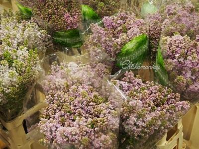 春のお花 New Covent Garden Flower Market_f0238789_217515.jpg