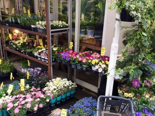 晴れた日には花を買って…_b0210699_23260167.jpg