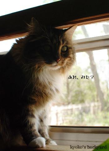 窓辺のBailey その2_b0253205_05082356.jpg