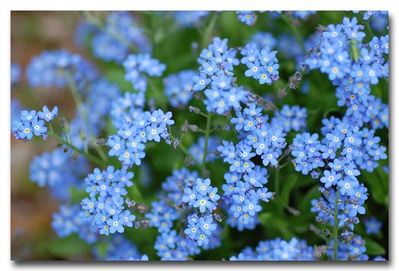 #1973 青い星_e0175405_7262610.jpg