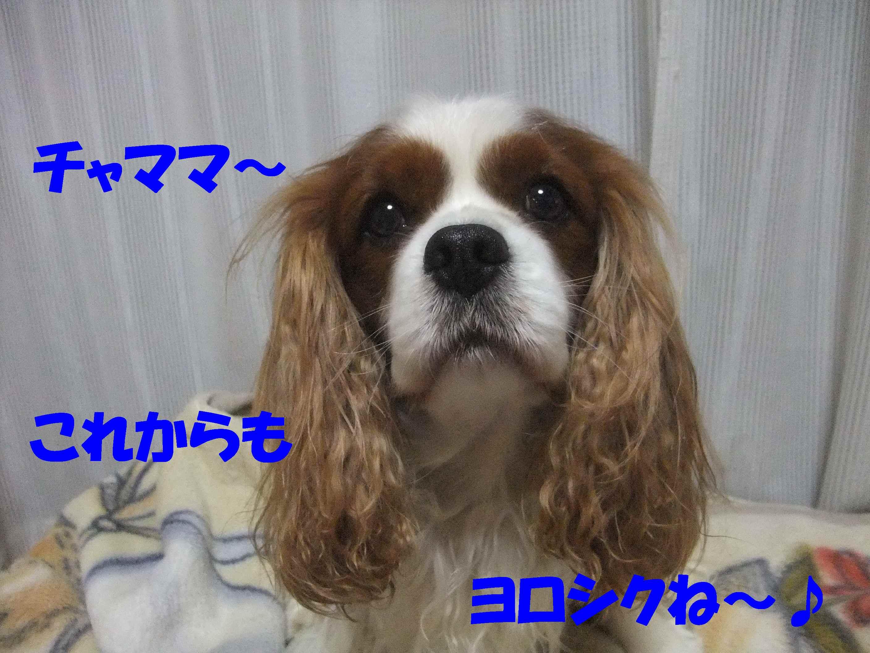 b0165139_2241449.jpg