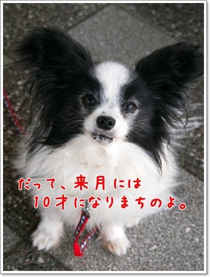 d0013149_00453851.jpg