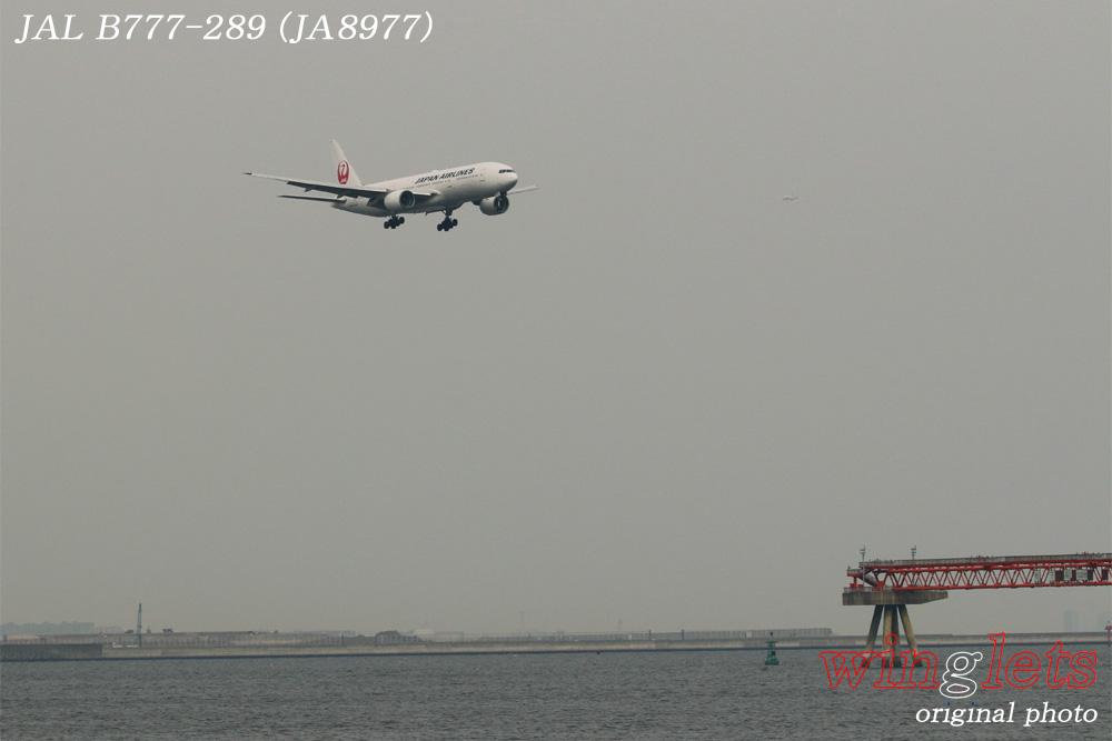 '16年 京浜島・つばさ公園レポート ・・・ JAL/JA8977_f0352866_15144482.jpg
