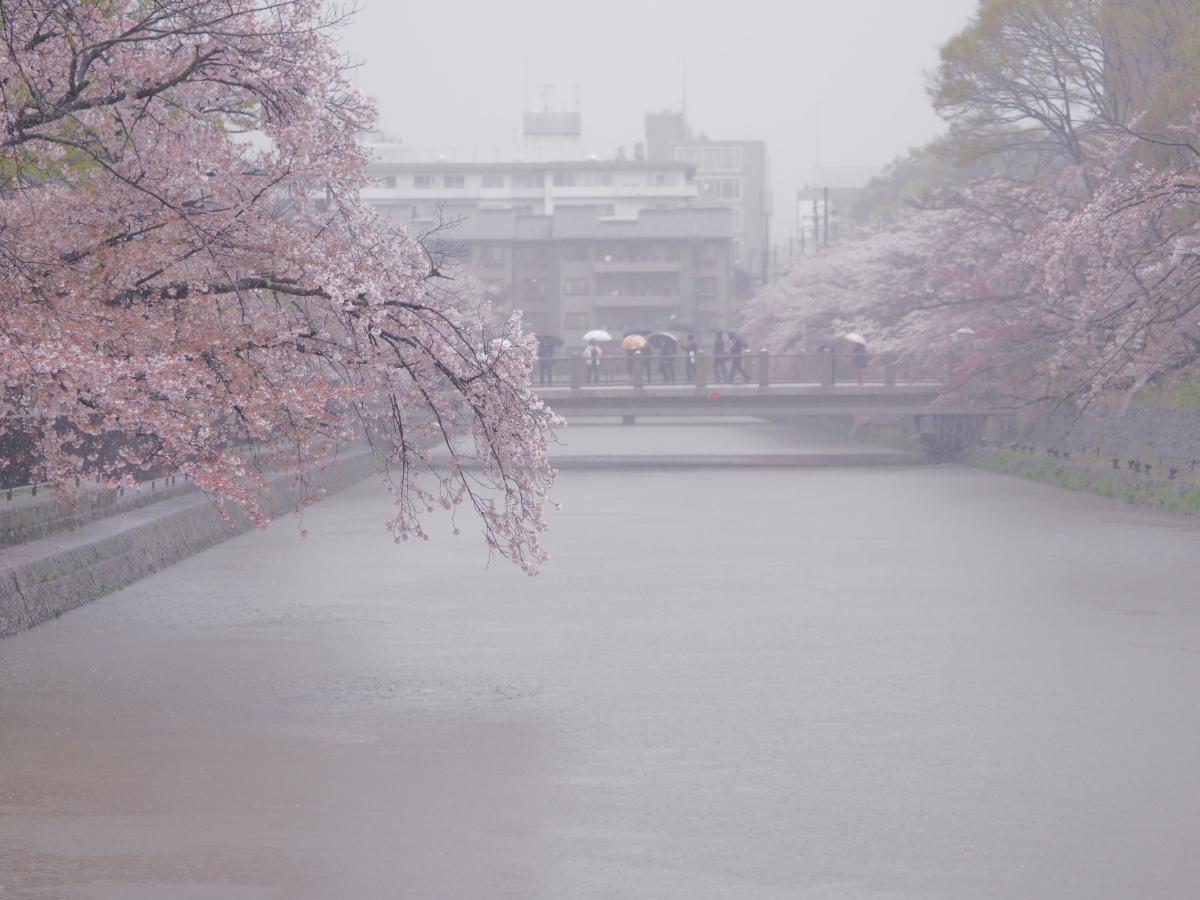 桜 2016 岡崎界隈_f0021869_23523885.jpg