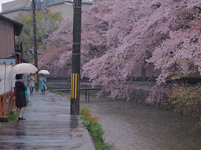 桜 2016 岡崎界隈_f0021869_23554322.jpg