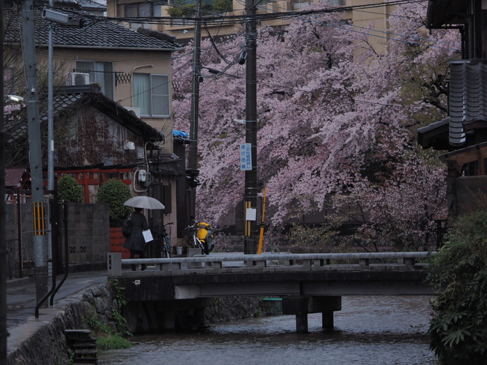 桜 2016 岡崎界隈_f0021869_23555870.jpg