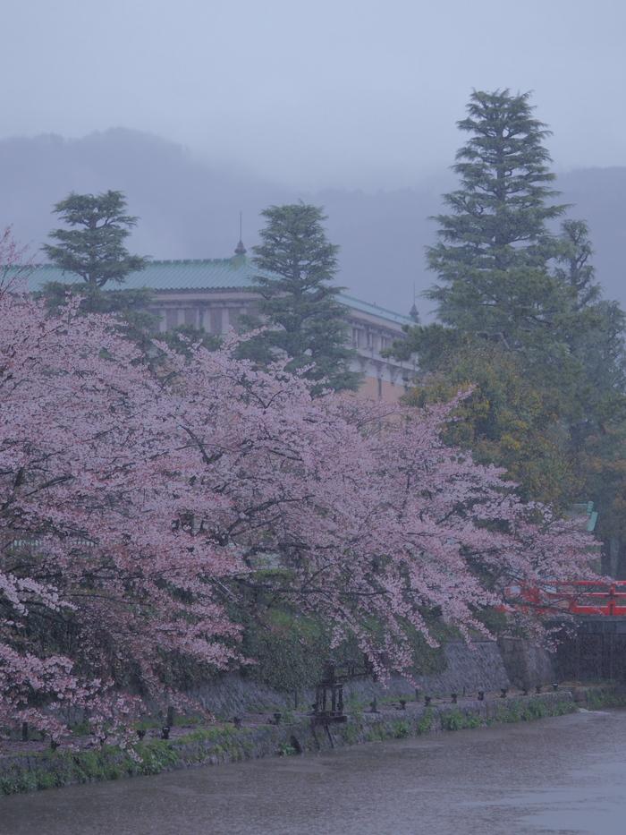 桜 2016 岡崎界隈_f0021869_23563449.jpg