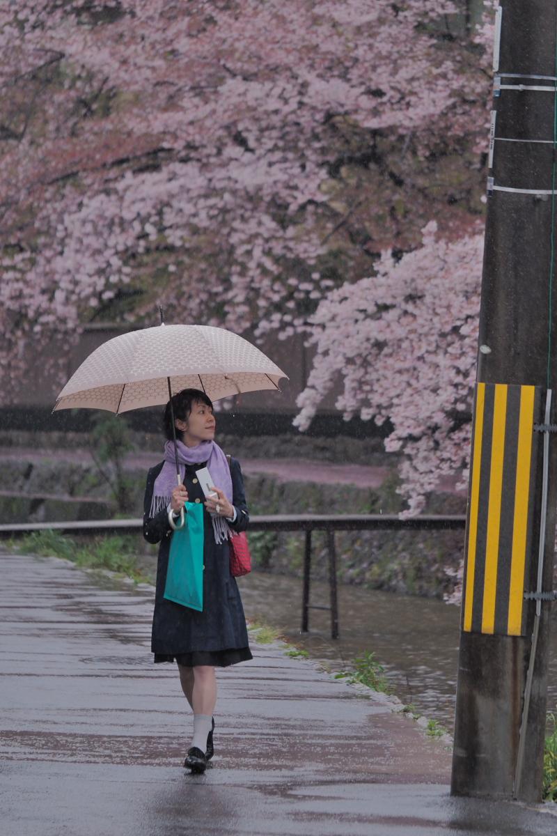 桜 2016 岡崎界隈_f0021869_23572599.jpg