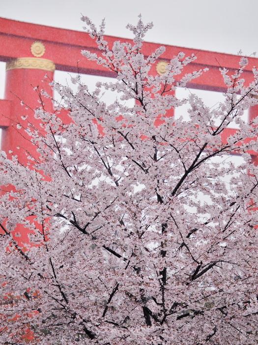 桜 2016 岡崎界隈_f0021869_2357451.jpg