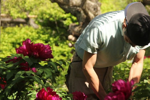 牡丹の花(箱崎花庭園)_b0214473_16194672.jpg