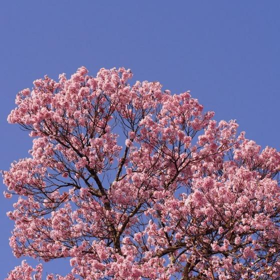 高遠の桜_a0104074_10341365.jpg