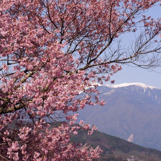 高遠の桜_a0104074_10361147.jpg