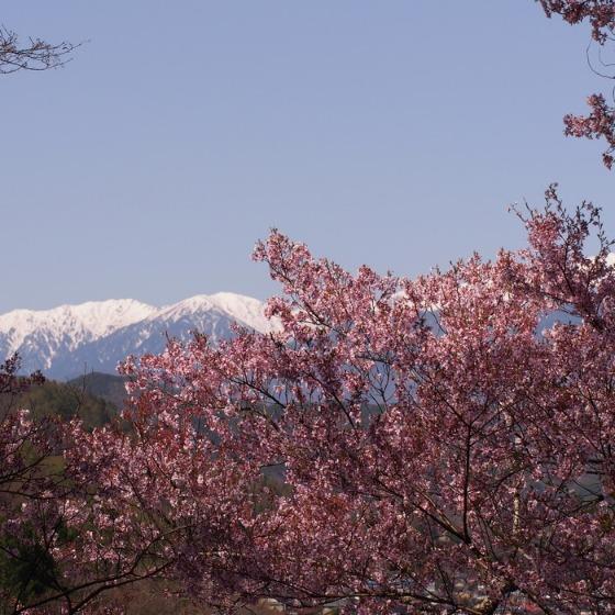 高遠の桜_a0104074_1037049.jpg