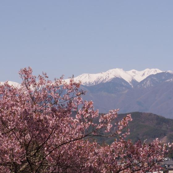 高遠の桜_a0104074_10372390.jpg