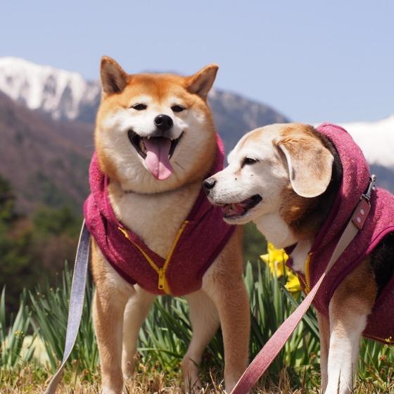 光善寺の水仙としだれ桜_a0104074_11552043.jpg