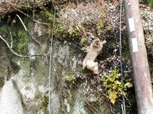 猿、サル、さる!_a0345079_10571210.jpg