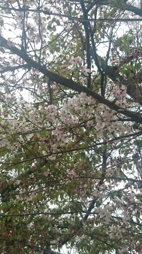 最高のお花見。_b0334704_12273449.jpg