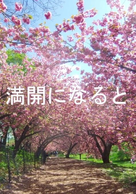 春のセントラルパーク、恒例の桜のトンネルはまだつぼみ_b0007805_9544048.jpg