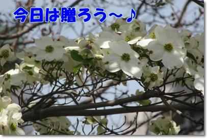 b0167519_14283512.jpg