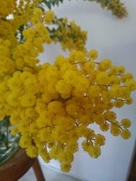 春_f0120026_14183277.jpg