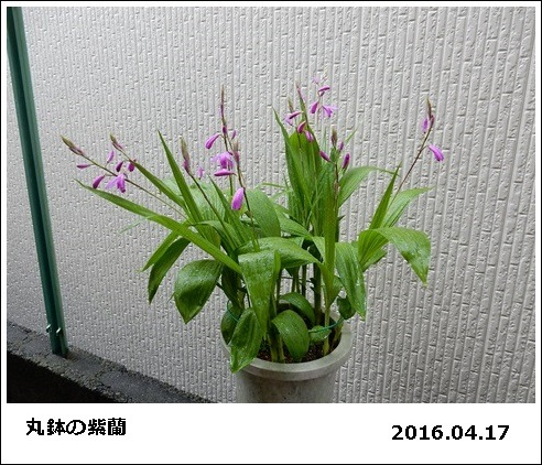 e0033229_1753421.jpg