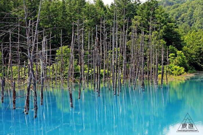 414 青い池 ~コロイドが作る美しい青色~_c0211532_1101688.jpg