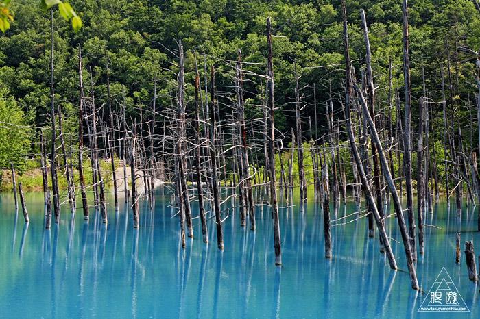 414 青い池 ~コロイドが作る美しい青色~_c0211532_110620.jpg