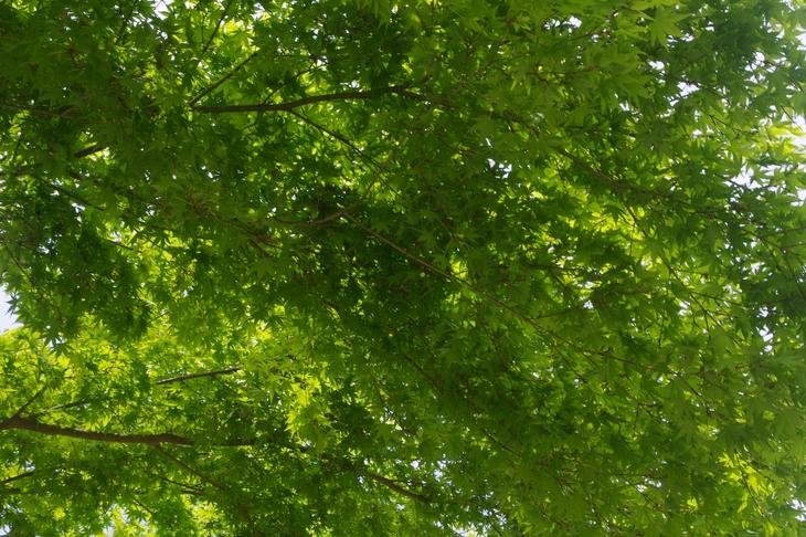 新緑のファミリーハイク_c0113733_1044743.jpg