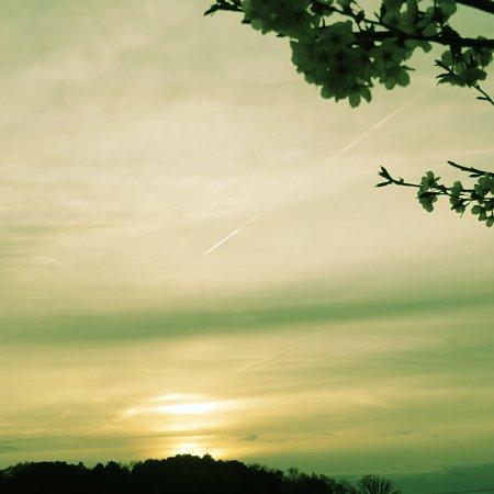 2016年4月24日 飛行機雲と桜花_b0341140_1422862.jpg
