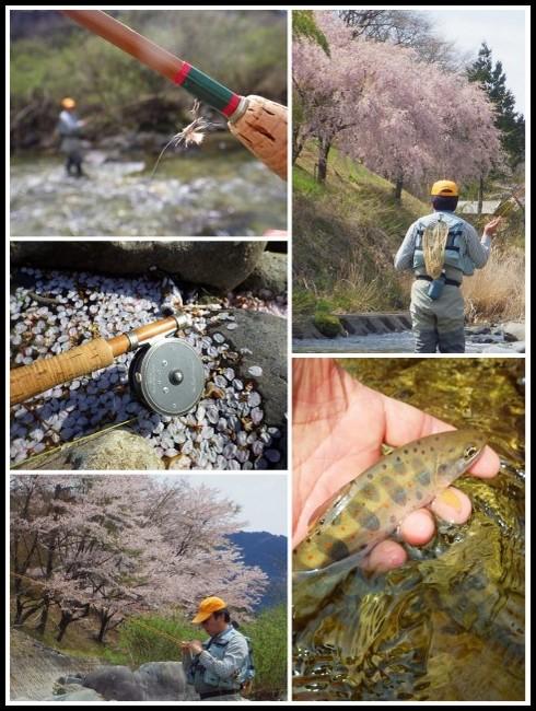 2016お花見釣行_f0053342_1113146.jpg