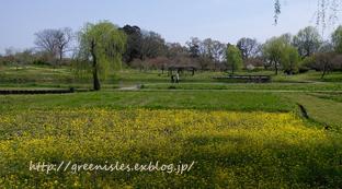 桃の花。_f0229147_13494197.jpg