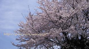 桃の花。_f0229147_13522205.jpg