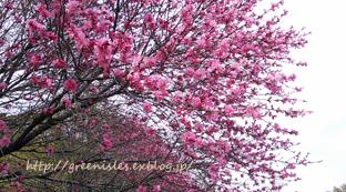 桃の花。_f0229147_13522238.jpg