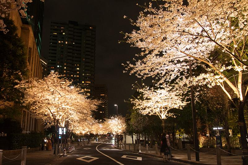 Hello from Tokyo 43 霊南坂_a0003650_22385021.jpg