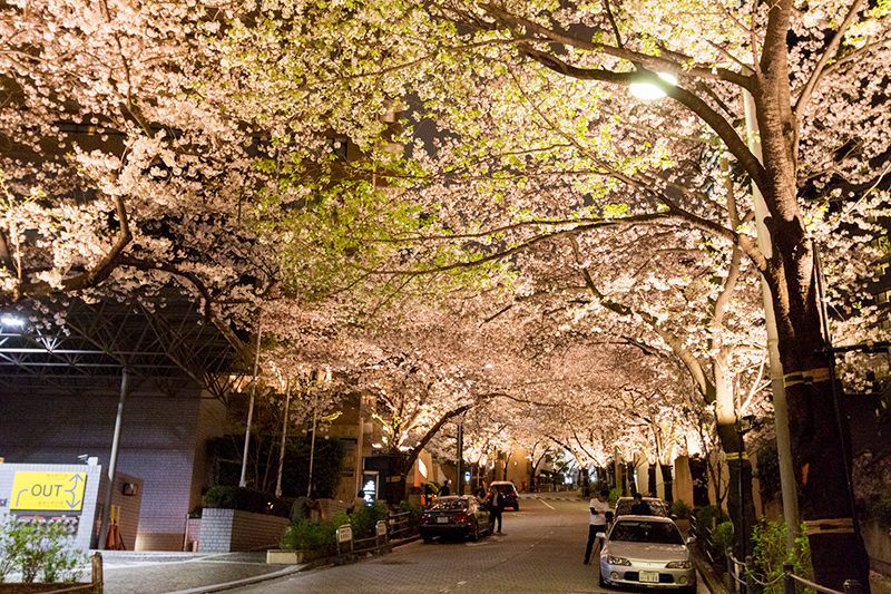 Hello from Tokyo 43 霊南坂_a0003650_2239771.jpg