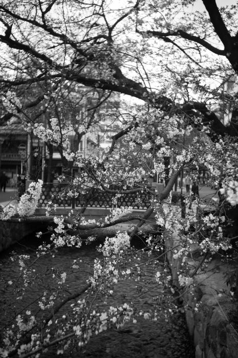京都 道すがら 6_d0349265_16164981.jpg
