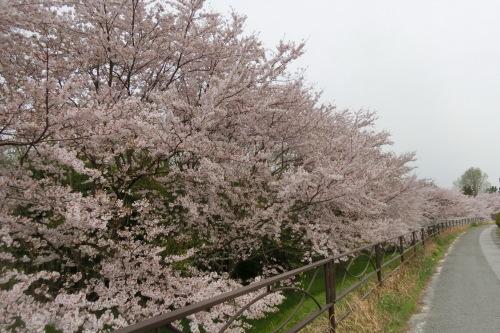 琵琶湖サイクリング_b0332867_21420068.jpg